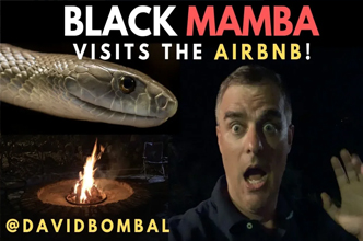Life can be short! Black Mamba at the Airbnb! Use your time effectively: CCNA | Time Management